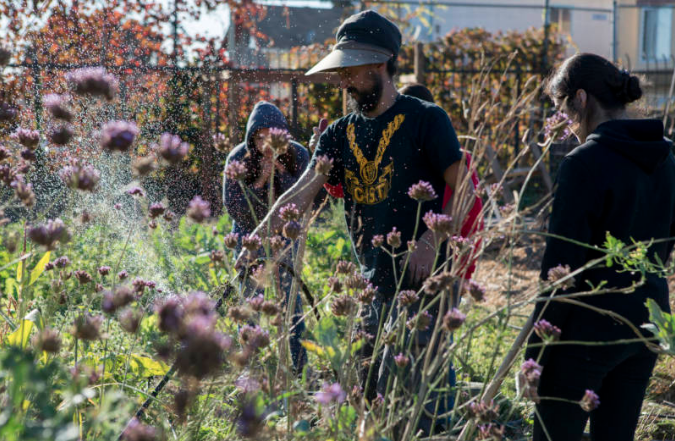 KQED features Oakland Leaf!